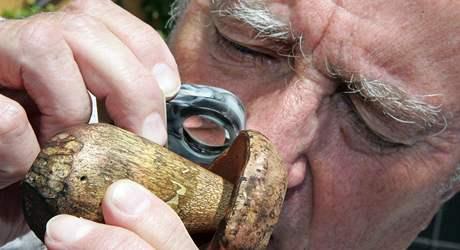 Mykolog Alois Vágner zkoumá lupou hřib koloděj, který mu donesl dnes do poradny houbař.