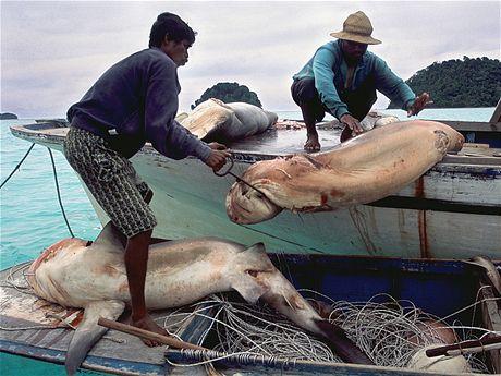 Lov žraloků pro ploutve vynáší miliardy