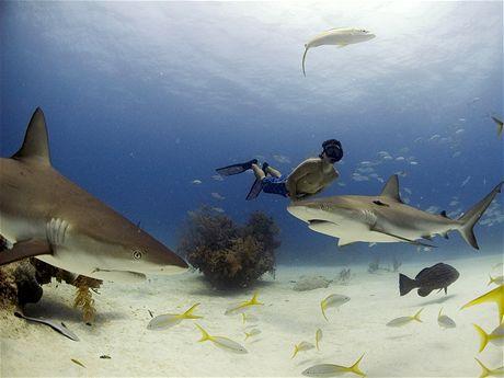 Plavání se žraloky na Bahamách