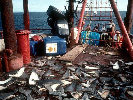 Žraločí ploutve na palubě
