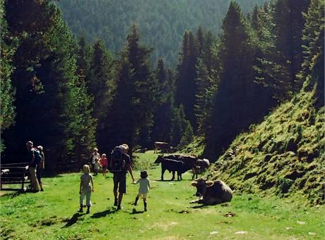 Krávy jsou v Tyrolsku na každém kroku