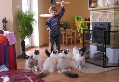 Ragdollové milují děti a naopak