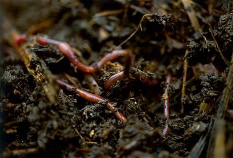 Z kuchyňského i zahradního odpadu vznikne po pár měsících hodnotný humus