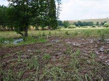Podmáčená pastvina kvůli bobří hrázi na Šternbersku.