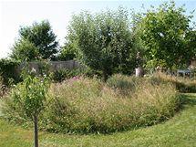 Část kvetoucí louky je ponechána na vysemenění, kosit se bude až na přelomu srpna a září