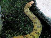 Anakonda z pražské zoo. Největší had světa, opředený spoustou fám a mýtů