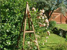 Opora pro sadovou růži může mít i takovouto podobu