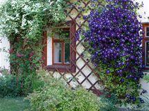 Dřevěné ostění kolem oken je efektně rozšířené o treláž, tedy rám vyplněný mřížkou z latí, která poskytne oporu působivým popínavkám