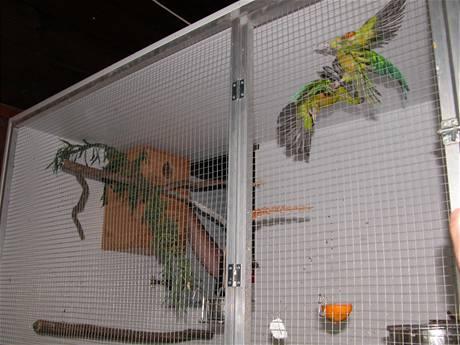 Vzácní papoušci nalezení při domovních prohlídkách