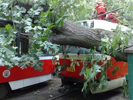 Pád stromu na tramvaj na konečné v pražské Stromovce u Výstaviště