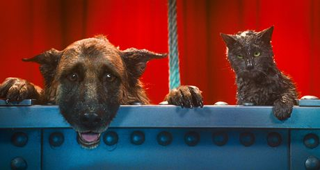 Z filmu Jako kočky a psi: Pomsta prohnané Kitty