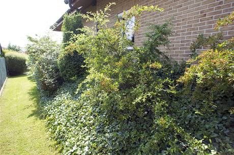 Krátký strmý svah podél jedné strany domu drží hranoly dřeva a pokrývají ho stálezelené rostliny: kaliny, břečťan, barvínek a tisy. Díky tomu se dole po rovině dá pohodlně projít kolem domu a lépe se tu seká trávník.