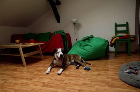 V podkrovním bytě žije i pes Ziggy