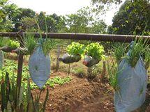 I tak lze pěstovat zeleninu