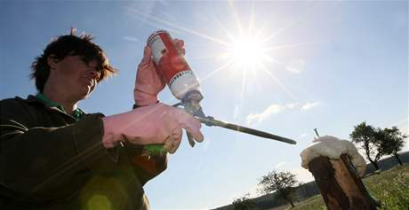 Pachové ohradníky, které chrání řidiče i zvěř, lemují na Vysočině už padesát kilometrů silnic
