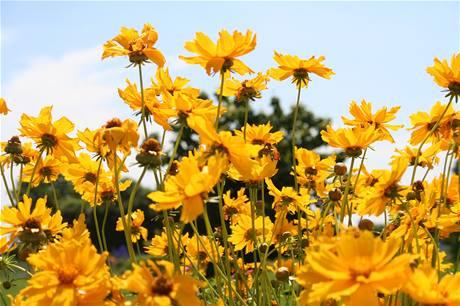 V botanické zahradě stále kvete mnoho letniček