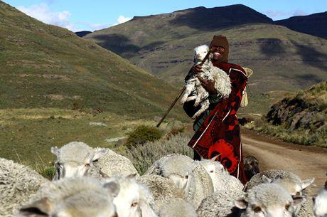 Mozambik, pasáček s poraněnou ovcí
