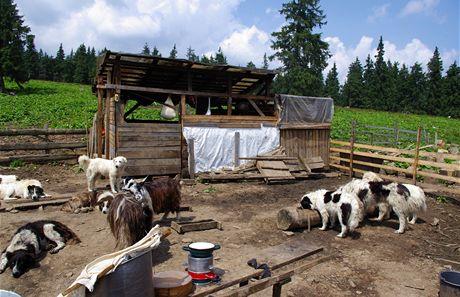 Rumunsko. Na salaši pod Rodnou