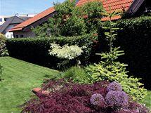 Dvě strany zahrady zakrývá živý plot z habru, který je odolný a dostatečně hustý