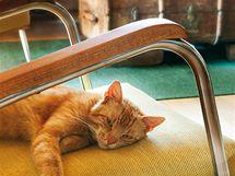 Kuchyni si dnes užívá i kočičí miláček rodiny