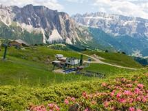 Růžové květy pěnišníku připomínají naše oblíbené azalky. V Dolomitech jsou zároveň jakýmsi indikátorem kyselosti půdy. Zatímco pěnišník srstnatý roste na vápenci, pěnišník rezavý můžete potkat na kyselých půdách