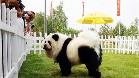 Přeliv v pandím stylu
