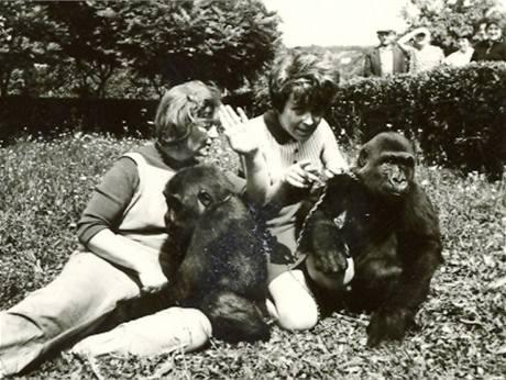 Samičky Gája a Golda s Jiřinou Bohdalovou na fotografii z počátku sedmdesátých let