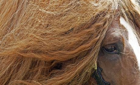 Agar, nejkrásnějí kůň na výstavě Koně v akci