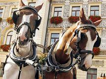 Koně v Pardubicích na výstavě Koně v akci