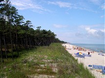 Polsko, Karwia. Borový les u pláže