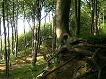 Polsko, Poddabie, bukový les nad mořem