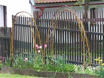 Brzy zjara můžete popínavkám vybudovat podpěry z vrbového proutí
