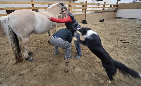 Nevidomá jezdkyně Adéla Šperlíková učí svého vodícího psa Mika naskočit na koně