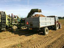 Sklizeň brambor soukromého zemědělce Ondřeje Dejmala