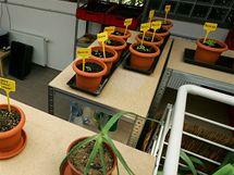 Květináče v novém K centru pro drogově závislé v Třebíči