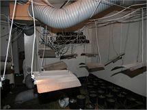 Velkopěstírna konopí, kterou nahradili tři cizinci byty ve dvou patrech hranického domu.