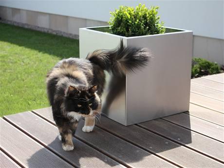 KASPER cat
