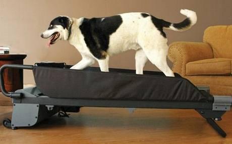 Běžecký trenažer pro psy