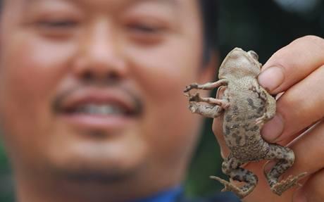 Šestinohá ropucha nalezená ve městě Fuquan