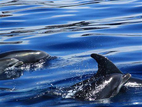 Okolí Los Gigantes je jedním z nejlepších míst pro pozorování delfínů.