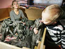 Jana Beranová chová 10 štěňat německé dogy, které vrhla její fena Angela Pacovský ranč (šampionka ČR 2009).