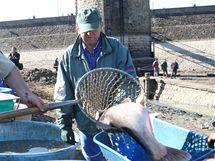 Rybáři loví ryby z luhačovické přehrady. Ta se bude čistit.