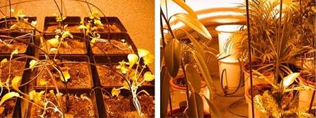 Pěstování budoucnosti