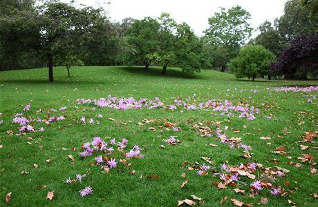 Londýn, podzimní květiny v St. James parku