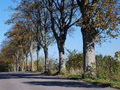 Stromy mezi Mladkovem a Pastvinami