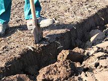 Těžší půdy důkladně zryjte