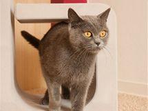 Kočky se dočkaly designového škrabadla