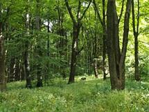 Les pod Velkým Lopeníkem