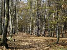 Habrové lesy na Volské homoli