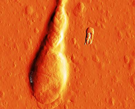Snímek sperime ze speciálního mikroskopu atomových sil